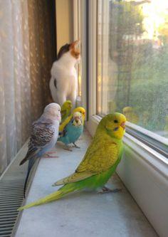 Cute Birds, Pretty Birds, Beautiful Birds, Animals Beautiful, Beautiful Family, Animals And Pets, Baby Animals, Funny Animals, Cute Animals