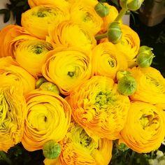 """""""Bonjour  Good Morning  Bom dia  Buenos dias Guten Morgen Dzien dobry Paris, Marche d Iena flowers.  #paris #parisalwaysanamazingidea #parisalwaysamazing…"""""""