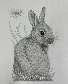 Original mounted pencil drawing of baby bunny by . Original mounted pencil drawing of baby bunny b Bunny Tattoos, Rabbit Tattoos, Rabbit Drawing, Rabbit Art, Bunny Rabbit, Drawing Sketches, Art Drawings, Drawing Ideas, Bunny Sketches