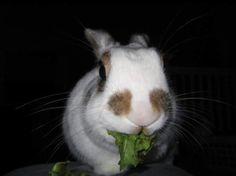 Moby the Rabbit http://ift.tt/2qK0P2l