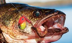 How to Catch Monster Walleyes on Hometown Waters