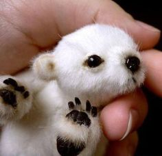 Baby polar bear! The Feeet oh my god the feeet.