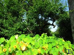 Manto de hojas | El reflejo de mi mirada, + fotos.