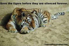 Save+More+Tigers.jpg (640×428)