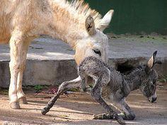 Young Animals Photographs J U S T B O R N- Foal by Nagcharan M