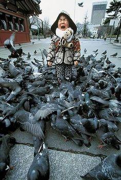 pigeon attack by Velvet Marauder, via Flickr