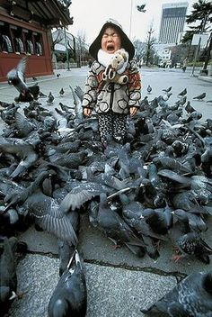pigeon attack by Velvet Marauder, via Flickr