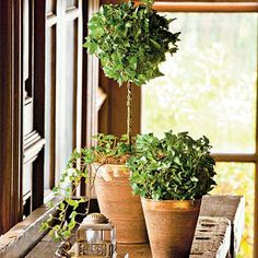 Fill the void once occupied by holiday decor with this quick fix from your garden center. English ivy topiaries that are pretrained on metal forms, like the lollipop Indoor Trees, Indoor Planters, Indoor Ivy, Indoor Flowers, Espalier, Hera, Ivy Plants, Topiary Trees, Topiary Plants