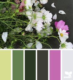 cut flora, from left to right, and color only Colour Pallette, Color Palate, Colour Schemes, Color Combos, Color Patterns, World Of Color, Color Of Life, Design Seeds, Color Stories