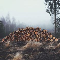 """upknorth: """" Not all forms of wealth fit in your pocket. """" The holy grail of wood piles. """" """""""