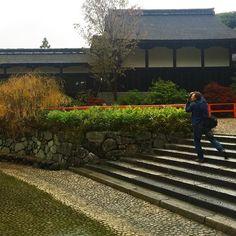 Карточка из осеннего фототура по Японии с Глебом Тарро #фототур #фотоволк #Киото #Япония #ГлебТарро #момидзи #клёны #осень #мгновения #фотомгновения @glebtarro @nnnadi
