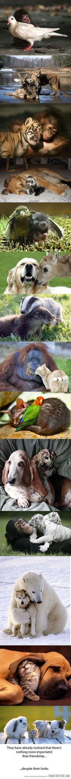 If animals can grow and learn with another, despite differences in appearance, then why can't humans do it?