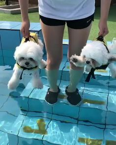 Funny Categories Fuunyy If You Like 👍 Share With Your Friends ❤ Source by FunyAnimalVideos Funny Animal Memes, Funny Animal Videos, Cute Funny Animals, Cute Baby Animals, Funny Dogs, Animals And Pets, Videos Funny, Baby Puppies, Cute Puppies