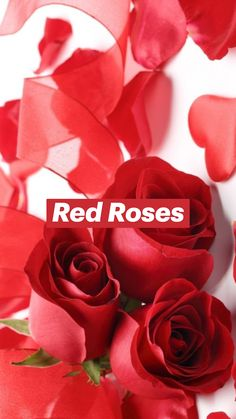 Best Red Roses