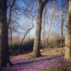 Springtime! Today - 1st March 2015
