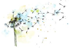 Dandelion in watercolor and ink by Watercolor_Vector Graphic on @creativemarket