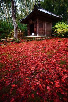 京都 直指庵 じきしあん 開山堂 散りもみじ Japan,Kyoto,Jikisi-an temple,scattered autumn leaves