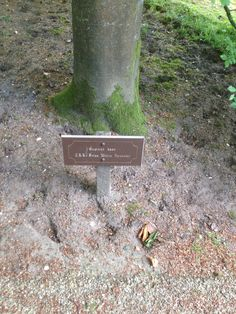 Bomen vernoemd naar Alexander