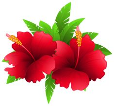 Exotic Flowers and Plant PNG Clipart Image