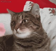Flower Causes Cat To Malfunction
