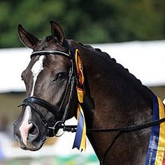 The most famous dressage horse of them all- Valegro! Look at that beautiful face!! ♥♥
