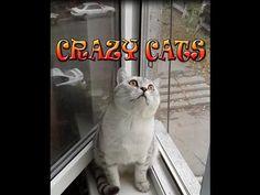 funny animal cat videos