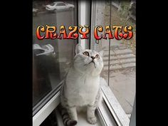 funny animal cat videos