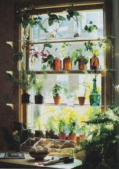 Window shelves for Plants