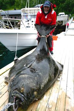 1000 images about rockfish and lingcod on pinterest for Deep sea fishing santa cruz