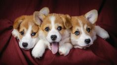 The Bored, The Curious, and The Undecided..... Adorable nonetheless!