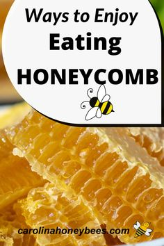 Experiment with these tips and learn how to eat honeycomb.  An unique food experience from a product made by bees!  #carolinahoneybees #honeycomb #eathoneycomb Honey Recipes, Raw Food Recipes, Eating Raw, Healthy Eating, Cooking With Honey, Human Digestive System, Grilled Sandwich, Ice Cream Toppings, Unique Recipes