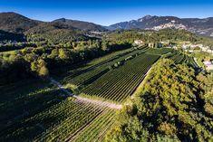 Baladez-vous dans le vignoble de Mendrisio autour d'Agriloro, découvrez les 29 cépages et dégustez le fameux Sottobosco! Organisez vos événements dans un cadre somptueux. Vineyard, Outdoor, Ride Or Die, Frames, Outdoors, Vine Yard, Vineyard Vines, Outdoor Games, The Great Outdoors