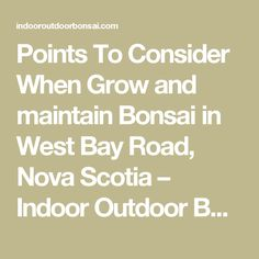 Points To Consider When  Grow and maintain Bonsai in West Bay Road, Nova Scotia – Indoor Outdoor Bonsai