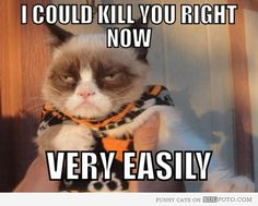 """Kung Fu cat - """"I could kill you right now very easily."""""""