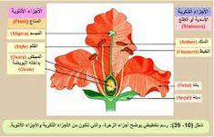 اوراق عمل الكائنات الحية والغير حية للأطفال نشاط الفرق بين الكائنات الحية والغير حية بالعربي نتعلم Baby Mobile Plants Science