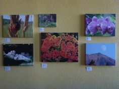 We have photographer - signed photo pictures either framed or on canvas in different sizes  Price range $20.00 - 80.00 Fine Dining, Range, Craft Ideas, Canvas, Shop, Pictures, Crafts, Painting, Art