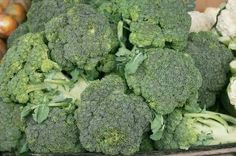 How to plant, grow and harvest broccoli in containers