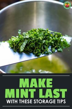 Knowing how to harvest mint ensures you'll have a continuous supply. We explain the right way to harvest and store mint for later use! Growing Mint, Growing Herbs, Some Recipe, Recipe Using, Drying Mint Leaves, Mint Plants, Starting A Vegetable Garden, Medicinal Herbs, Fresh Mint