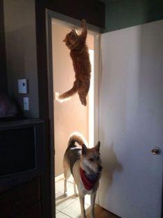 1.Malhando no batente da porta