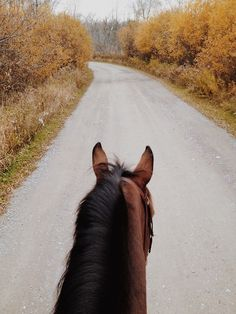 jillinsley: What else is new. All The Pretty Horses, Beautiful Horses, Trail Riding, Horse Riding, Horse Ears, Horse Photos, Equine Photography, Horseback Riding, Nice View