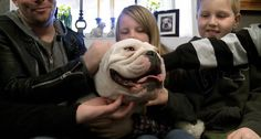 A True Love Bulldog Story.. I can't Believe What this Guy Built for His Dog! - Built to Inspire