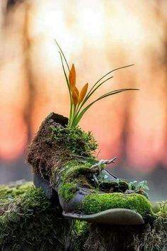Enchanting Nature and Art All Nature, Science And Nature, Amazing Nature, Nature Wallpaper, Nature Pictures, Belle Photo, Beautiful Images, Beautiful Beautiful, Beautiful Flowers