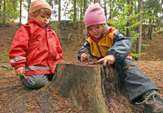 Radical back-to-nature forest kindergartens where children are allowed to climb trees and play with fire have spread across the country. Will the concept of the  Waldkindergarten  become Germany's next export success?