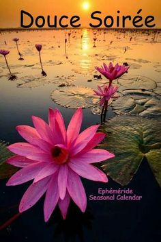 Exotic Flowers, Pink Flowers, Karma, Gifs, Yoga Art, Water Lilies, Simply Beautiful, Beautiful People, Good Morning