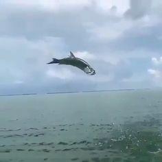Fishing Videos, Sport Fishing, Kites, Saltwater Fishing, Freshwater Fish, Sea Creatures, Southern California, Fresh Water, Whale