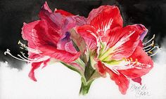 Types of Houseplant Bugs and Methods to Check Their Infestation Amaryllis Minerva By Brenda Behr Watercolor X Christmas Drawing, Christmas Paintings, Watercolor Cards, Watercolor Flowers, Watercolor Paintings, Amaryllis, Acrilic Paintings, Red Art, Flower Art
