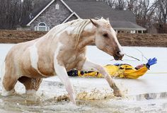 Free: Both horses managed to escape a certain death thanks to a brave team of rescuers