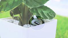 La pianta che ricarica lo smartphone.