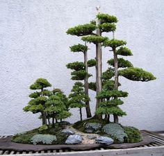 Juniper forest.