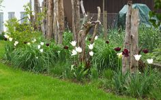 Gräserpflanzung mit Schemmholz als leichter Sichtschutz und Raumtrennung, Romanshorn (2014)